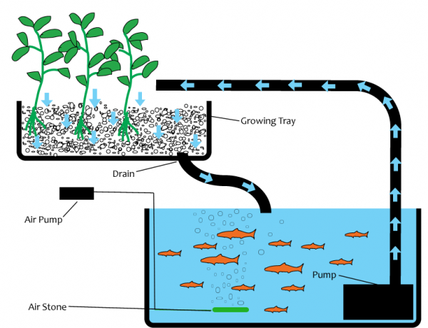 Survival Aquaponics